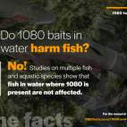 1080-facts-fish-v1